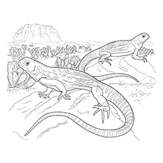 green iguana coloring page green iguana pages coloring pages iguana green page coloring