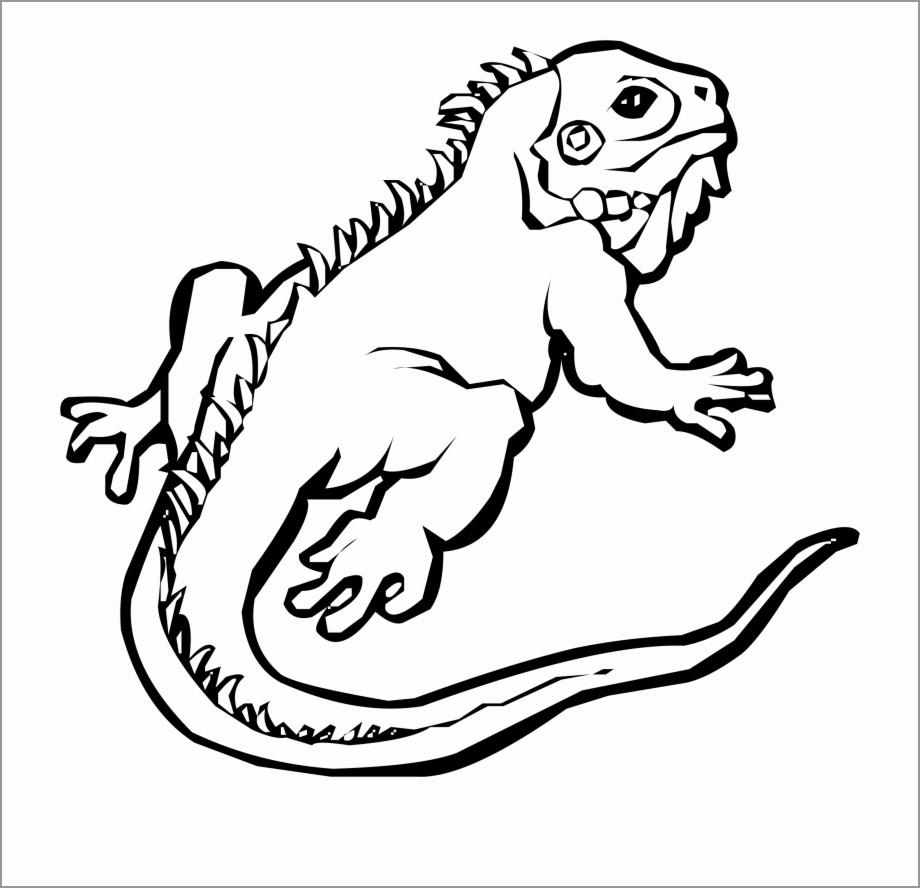 green iguana coloring page iguana coloring page free printable coloring pages iguana coloring page green