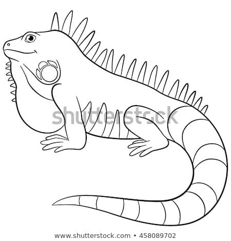 green iguana coloring page iguana coloring pages getcoloringpagescom green iguana coloring page
