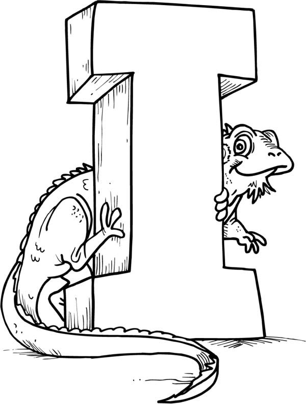 green iguana coloring page lizard cartoon stock images royalty free images vectors coloring green iguana page