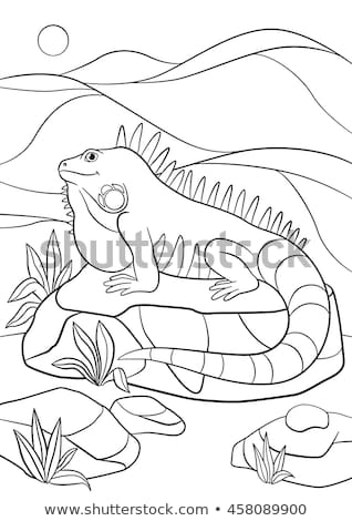 green iguana coloring page top 10 free printable lizard coloring pages online page coloring iguana green