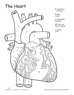 gross anatomy coloring book anatomy labeling worksheets google search i heart coloring anatomy gross book