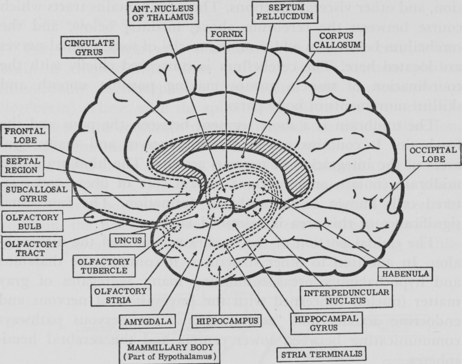 gross anatomy coloring book brain drawing with labels at getdrawingscom free for anatomy book gross coloring