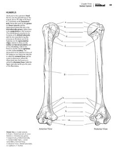gross anatomy coloring book kaplan anatomy coloring bookpdf boudli pinterest book gross coloring anatomy
