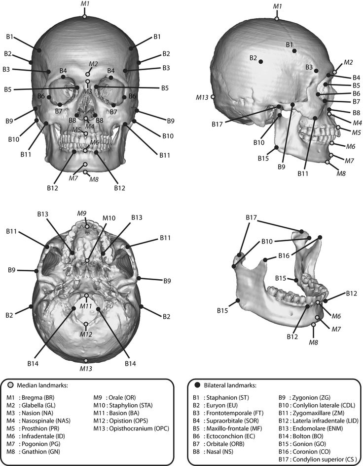 gross anatomy coloring book skull anatomy coloring page the anatomical landmarks of coloring book anatomy gross