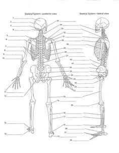 gross anatomy coloring book unlabeled skeleton print out 13 bones of the head and gross anatomy coloring book