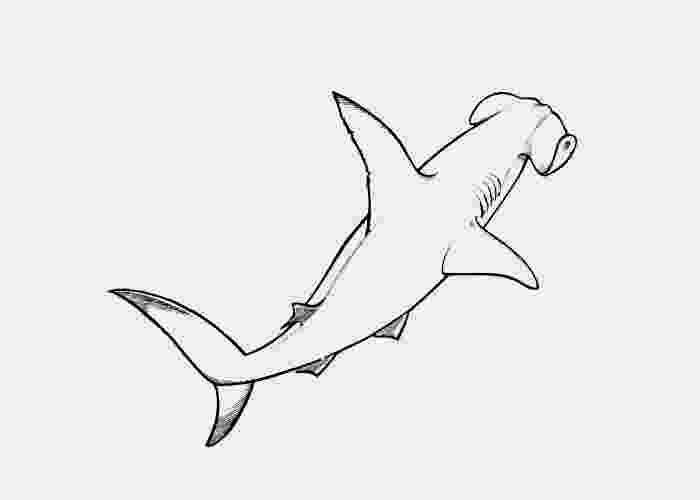 hammerhead shark coloring pages to print great hammerhead shark coloring page supercoloringcom hammerhead pages to print coloring shark
