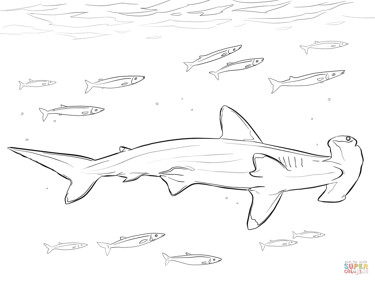 hammerhead shark coloring pages to print great hammerhead shark drawing at getdrawingscom free coloring hammerhead pages shark print to