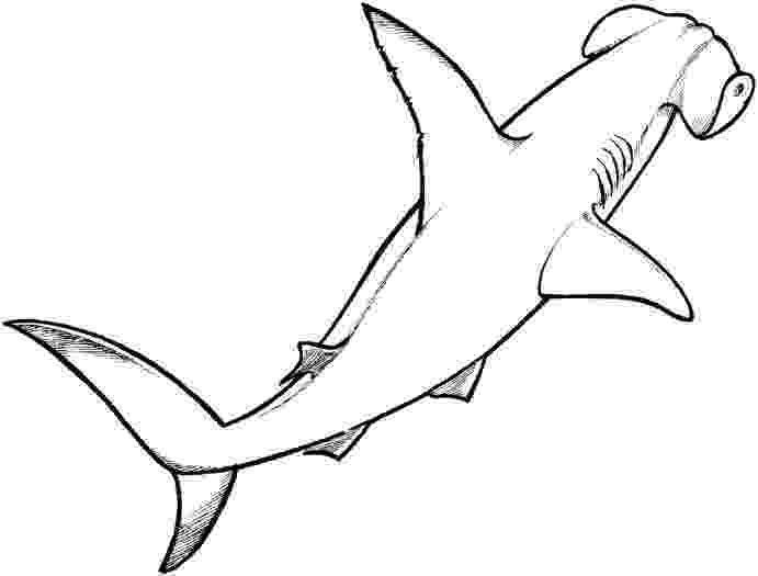 hammerhead shark coloring pages to print scalloped hammerhead shark coloring page free printable shark hammerhead print to coloring pages
