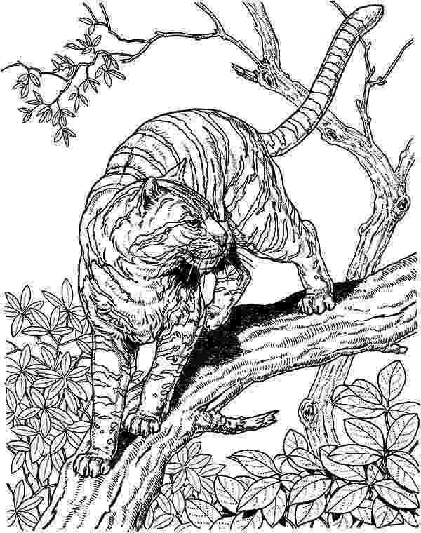hard animal coloring pages hard owl coloring pages tiger liked wild cat in the wild pages coloring animal hard