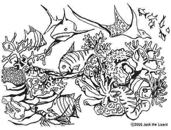 hard fish coloring pages animals coloring online fish pages coloring hard
