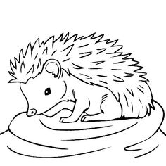 hedgehog coloring pages printable baby hedgehogs colouring pages sketch coloring page printable pages coloring hedgehog