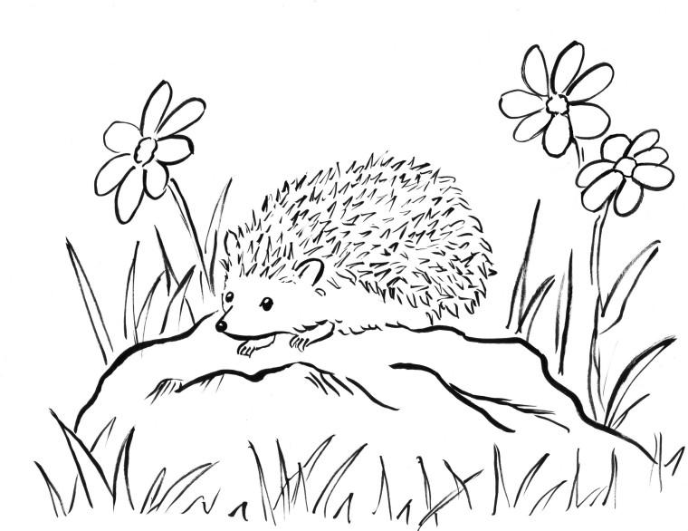 hedgehog coloring pages printable hedgehog coloring page getcoloringpagescom pages coloring printable hedgehog
