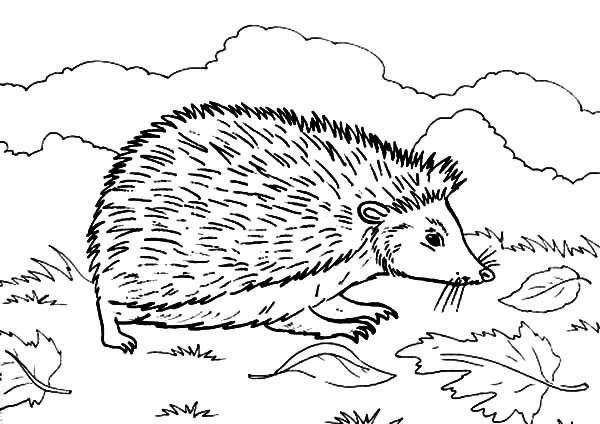 hedgehog coloring pages printable hedgehog craft template google search library kid coloring hedgehog pages printable