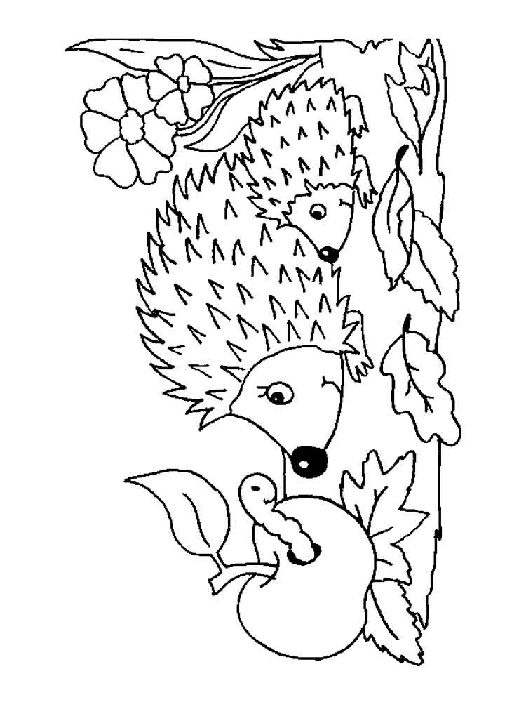 hedgehog picture to colour cute hedgehog coloring page free printable coloring pages colour hedgehog picture to