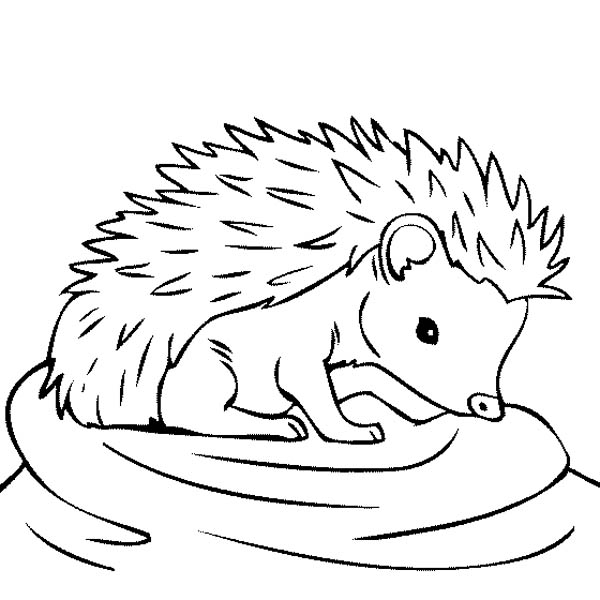 hedgehog picture to colour free hedgehog coloring pages for kids preschool crafts colour to picture hedgehog