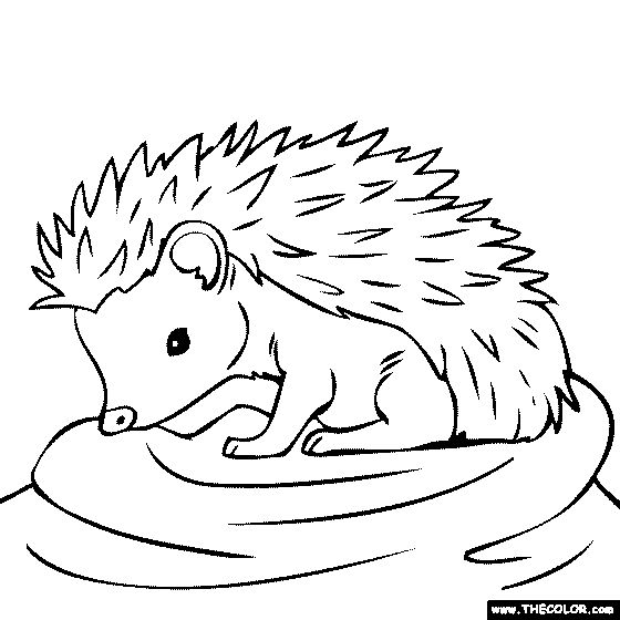 hedgehog picture to colour hedgehog coloring page getcoloringpagescom hedgehog colour to picture