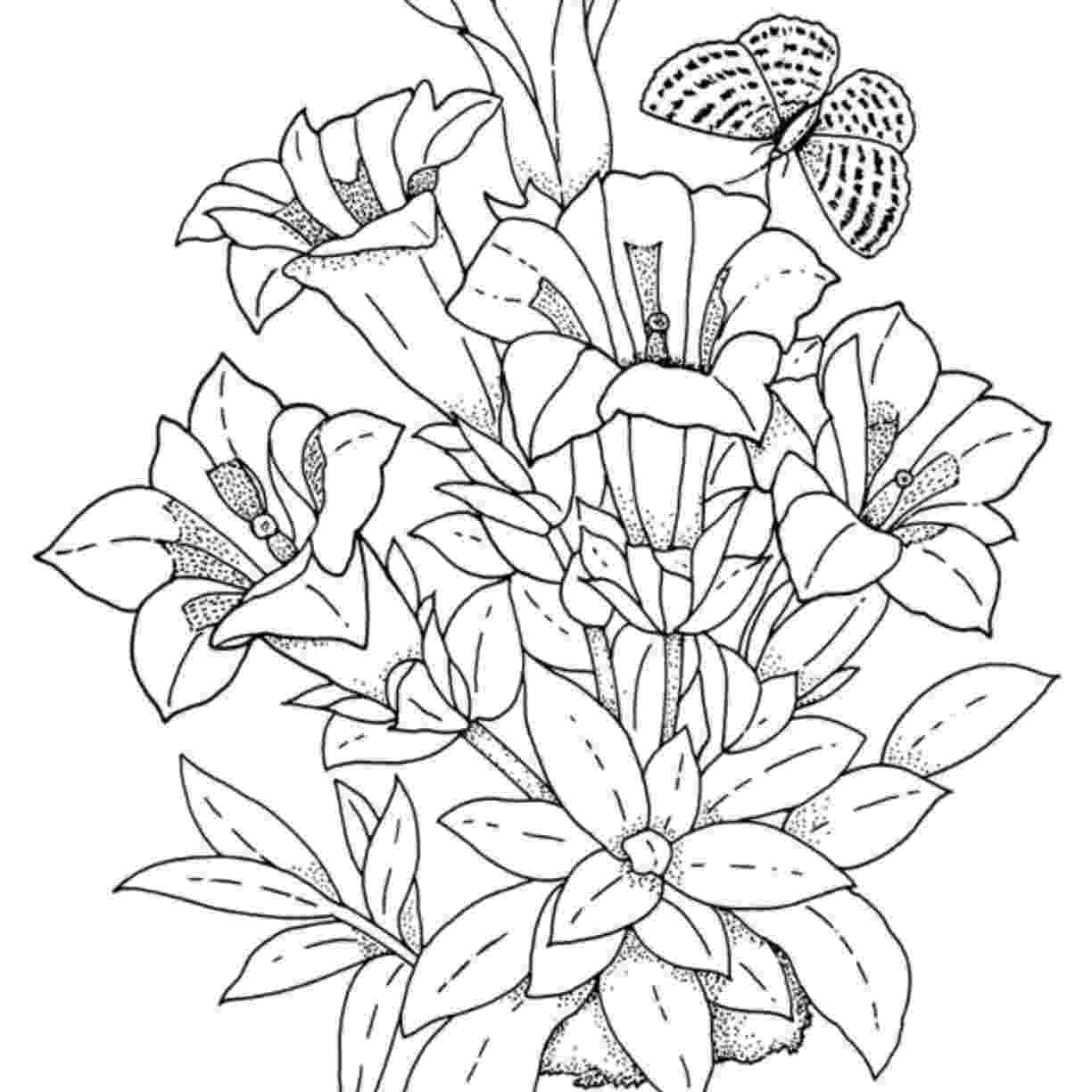 hibiscus coloring pages free printable hibiscus coloring pages for kids coloring pages hibiscus
