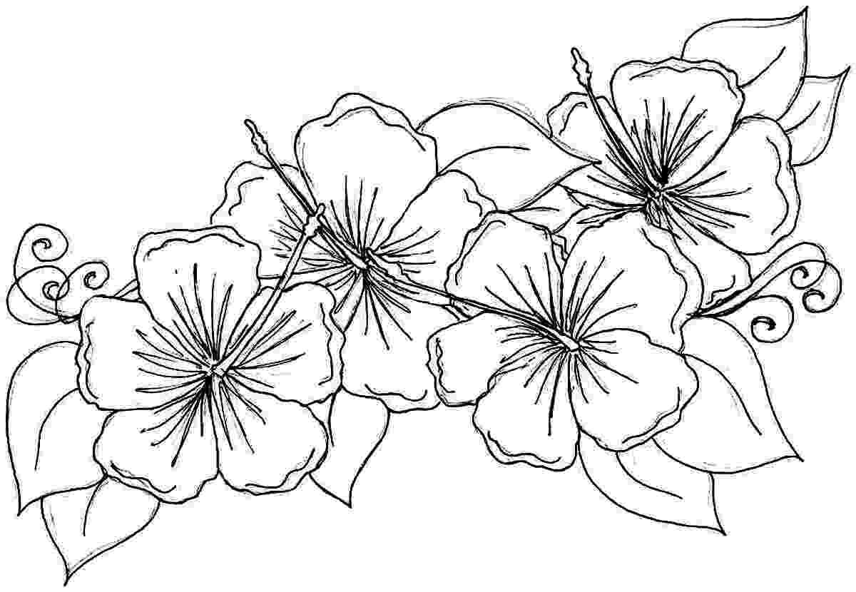 hibiscus coloring pages free printable hibiscus coloring pages for kids pages coloring hibiscus