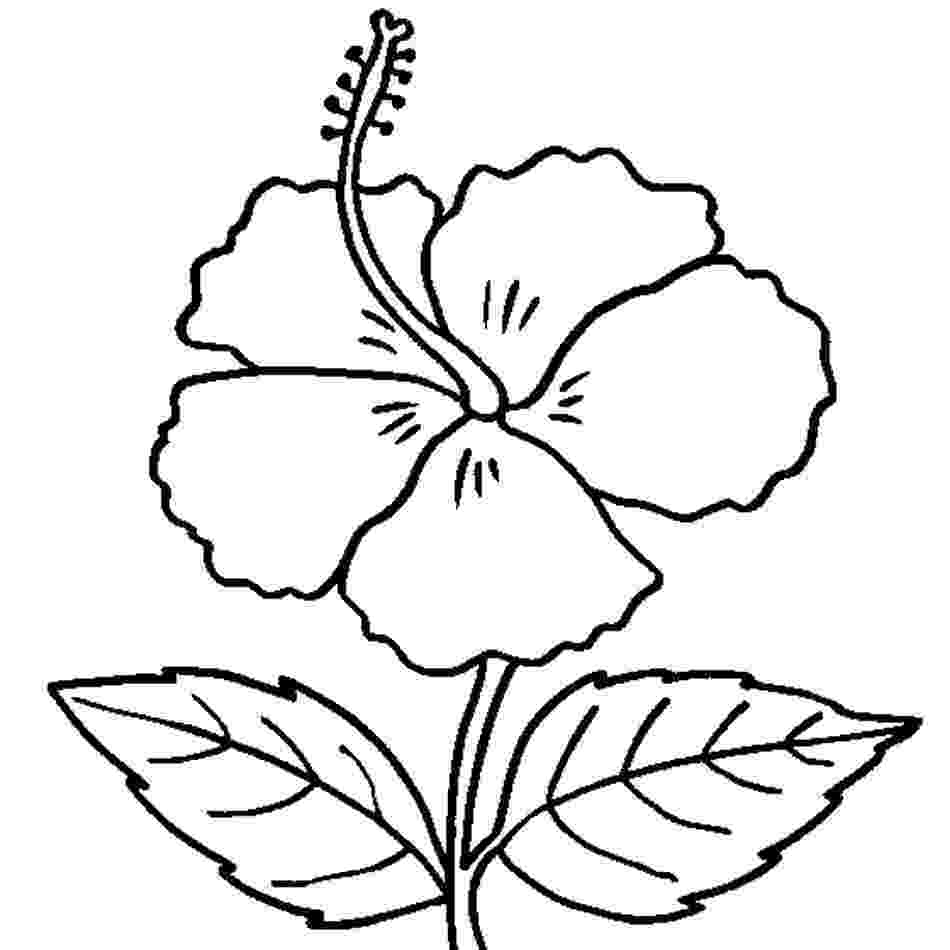 hibiscus coloring pages free printable hibiscus coloring pages for kids pages hibiscus coloring 1 2