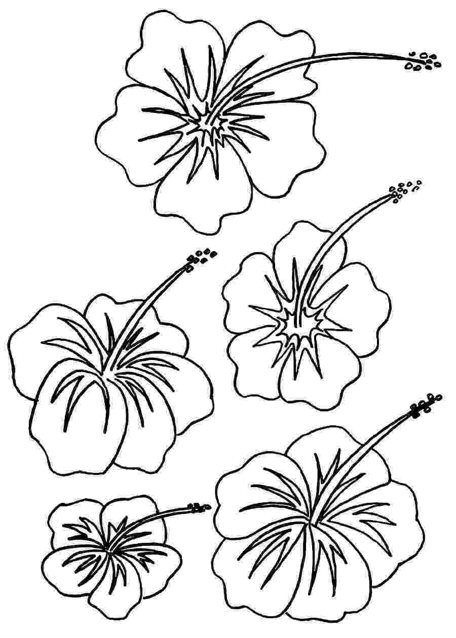 hibiscus coloring pages watercolor hibiscus tattoo at getdrawingscom free for hibiscus coloring pages
