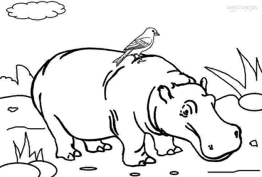 hippopotamus coloring page 10 cute free printable hippo coloring pages for toddlers page coloring hippopotamus
