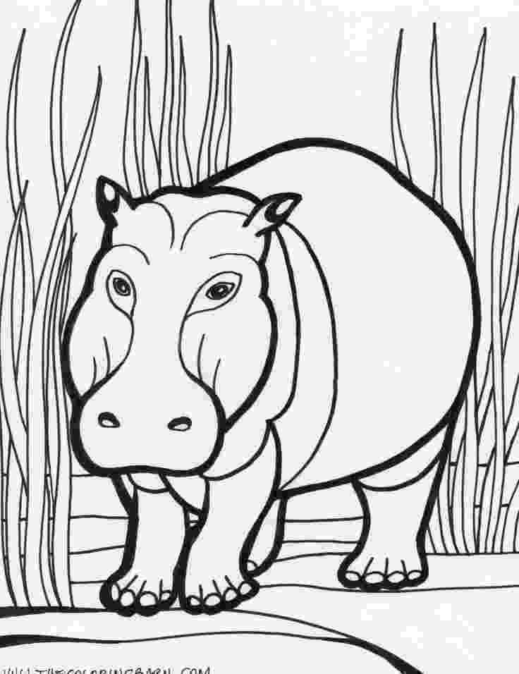 hippopotamus coloring page 99 best safari non fiction colouring book images on pinterest coloring hippopotamus page