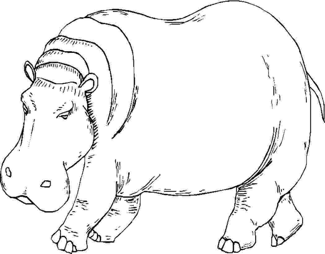 hippopotamus coloring page hippopotamus coloring pages kidsuki coloring page hippopotamus