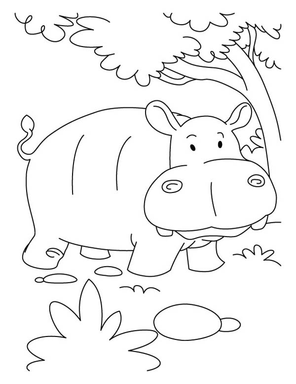 hippopotamus coloring pages 4 hippopotamus animal coloring pages coloring pages hippopotamus