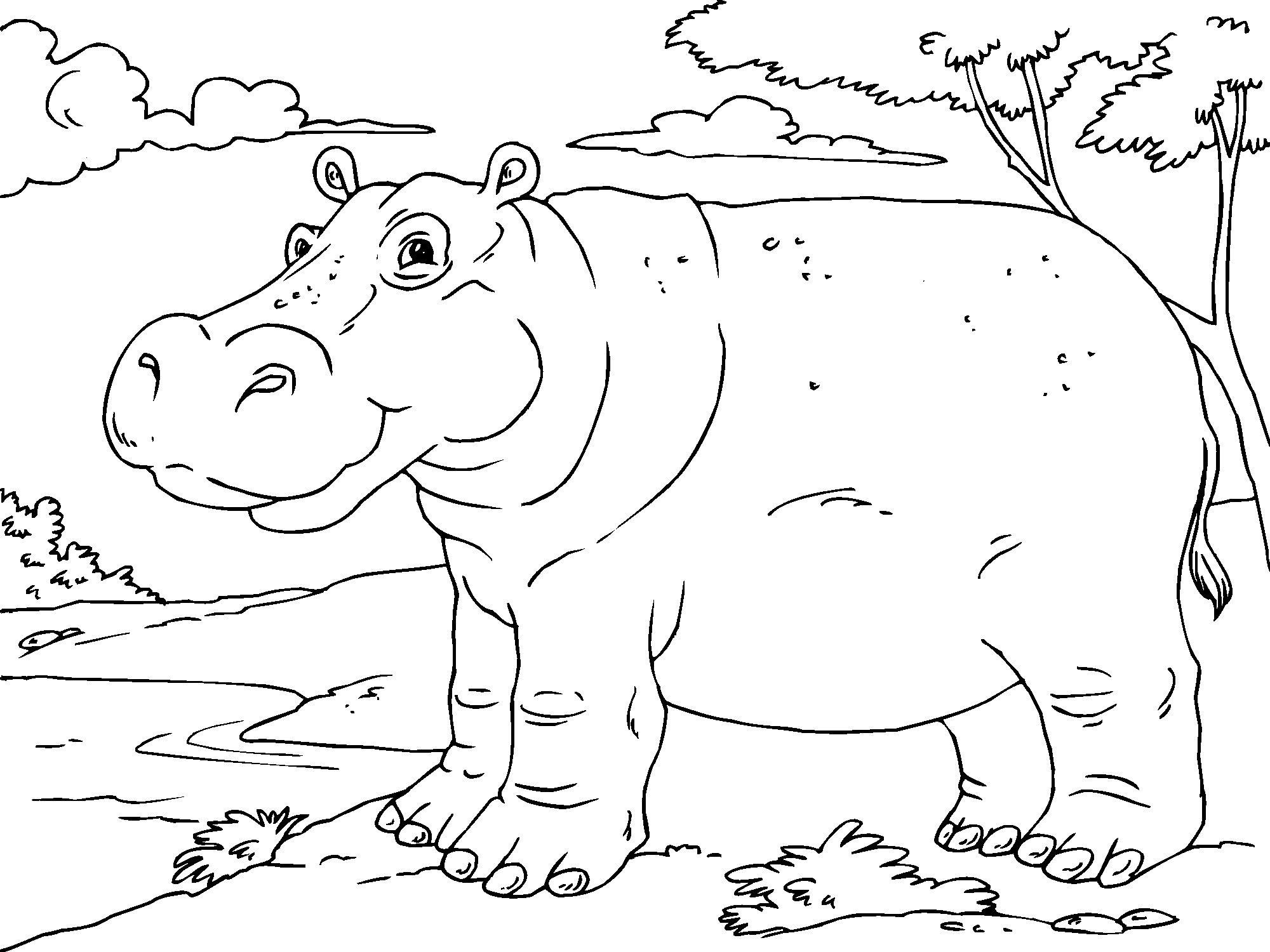 hippopotamus coloring pages cute hippo coloring pages to kids hippopotamus coloring pages