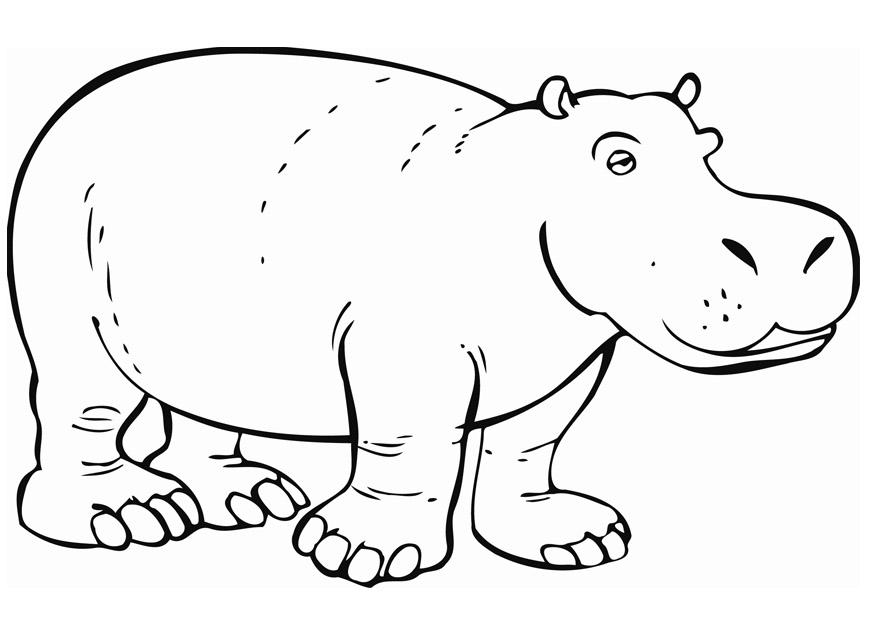 hippopotamus coloring pages free printable hippo coloring pages for kids coloring hippopotamus pages 1 1