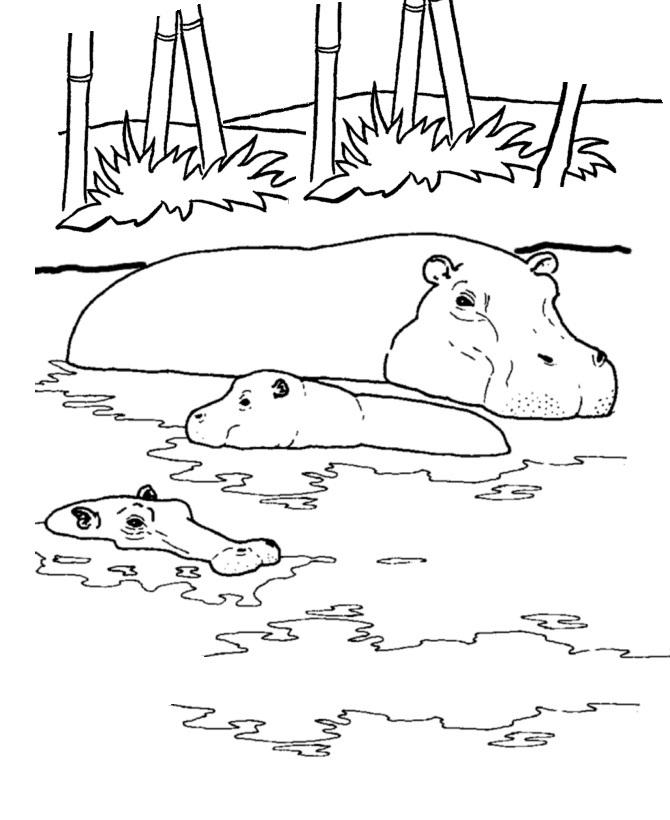 hippopotamus coloring pages free printable hippo coloring pages for kids pages coloring hippopotamus