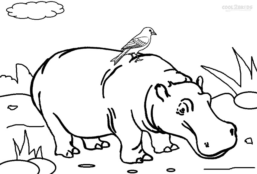 hippopotamus coloring pages printable hippo coloring pages for kids cool2bkids hippopotamus coloring pages