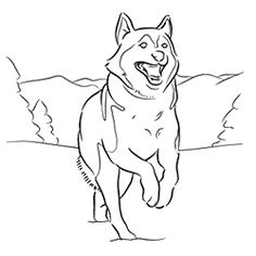 husky coloring pages coloring husky pages coloring husky pages