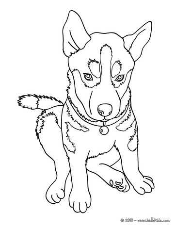 husky coloring pages husky coloring pages free printable coloring pages for kids coloring pages husky