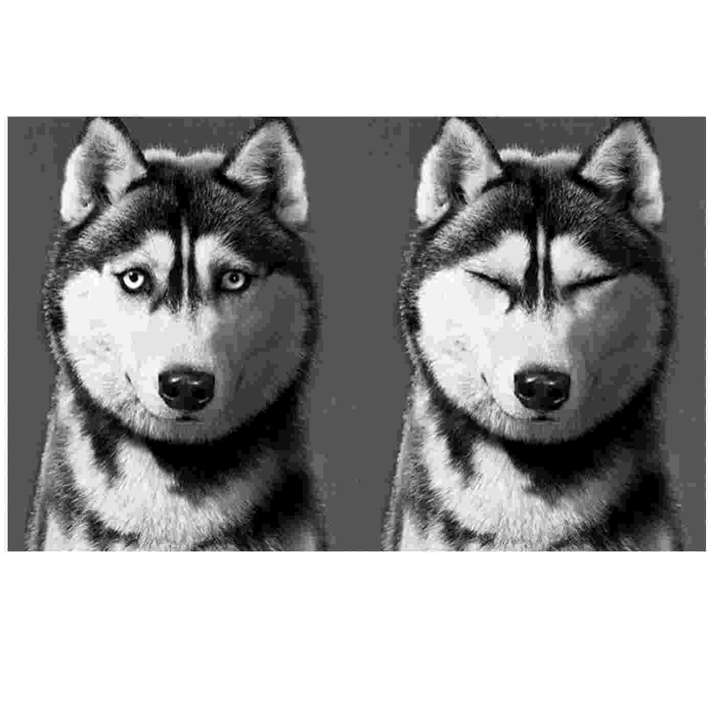 husky pictures to print husky coloring pages free printable coloring pages for kids print to husky pictures