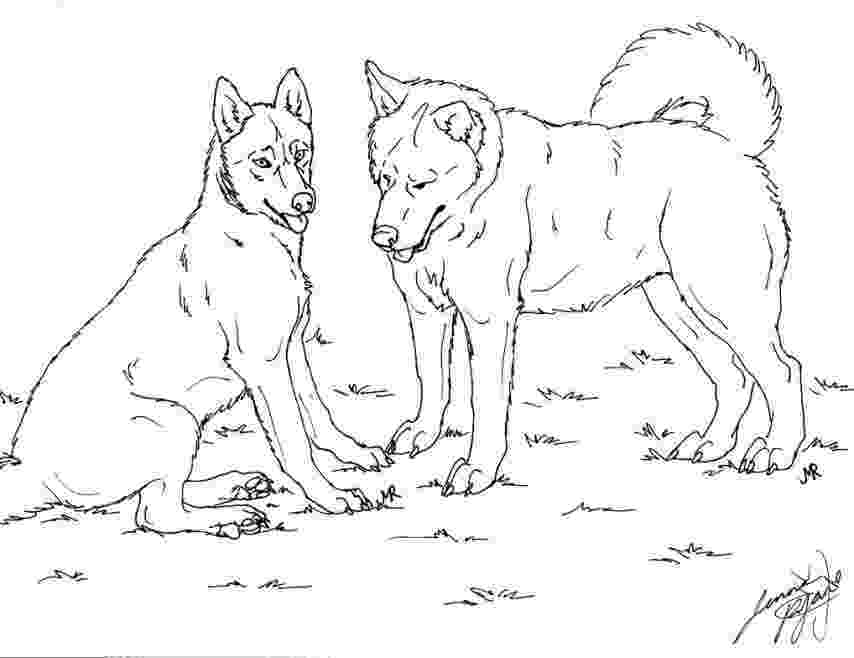 husky pictures to print husky coloring pages hellokidscom print to husky pictures