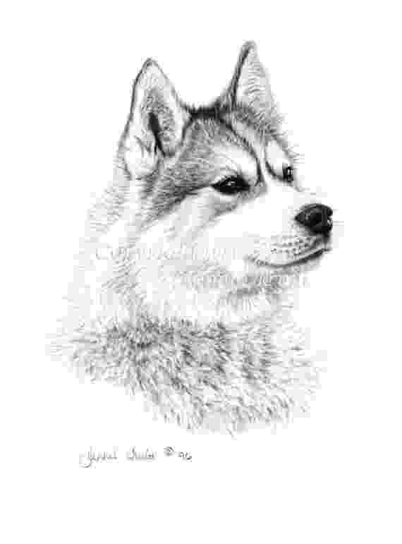 husky pictures to print printable puppy coloring pages for kids cool2bkids print husky to pictures