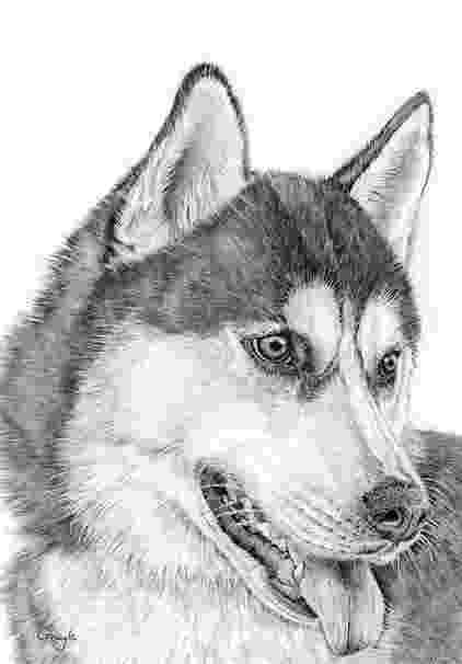 husky pictures to print siberian husky dog coloring page for national pet day to husky pictures print