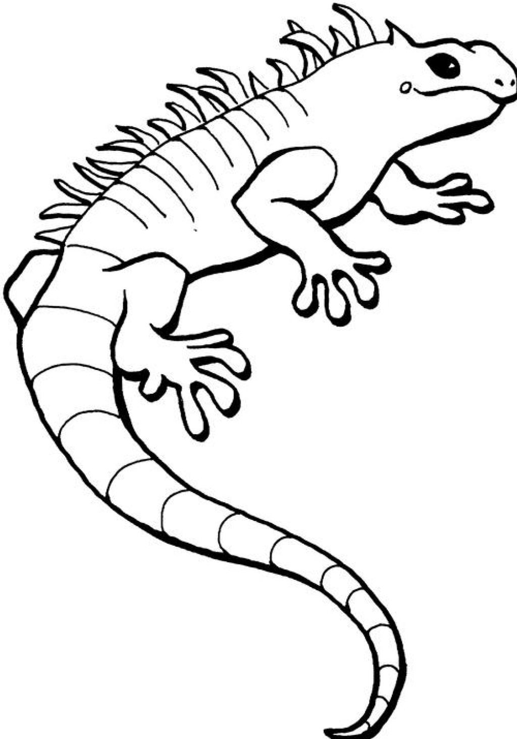 iguana coloring pages free printable iguana coloring pages for kids pages coloring iguana