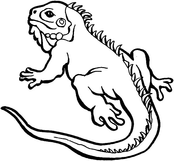 iguana coloring pages iguana pages coloring iguana pages coloring