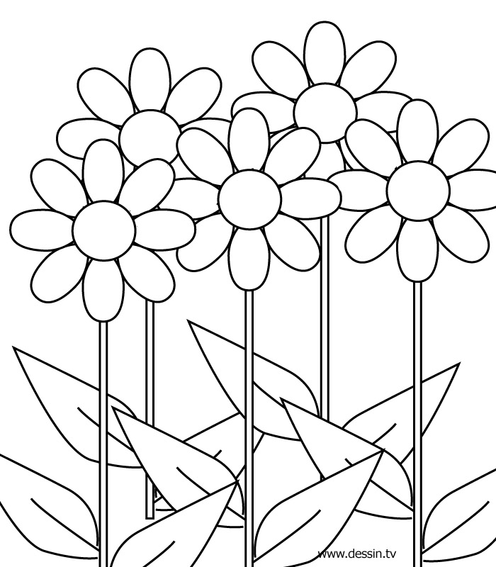 images of flowers to color free printable flower coloring pages for kids cool2bkids color flowers of images to