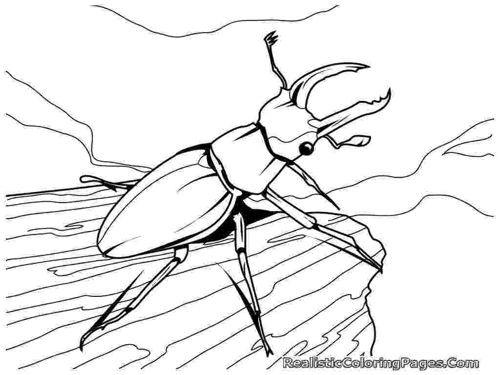 insect colouring page realistic insect coloring pages realistic coloring pages insect page colouring