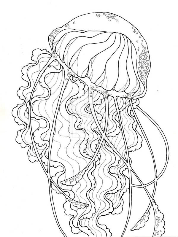 jelly fish coloring page cute jellyfish coloring pages fish page coloring jelly