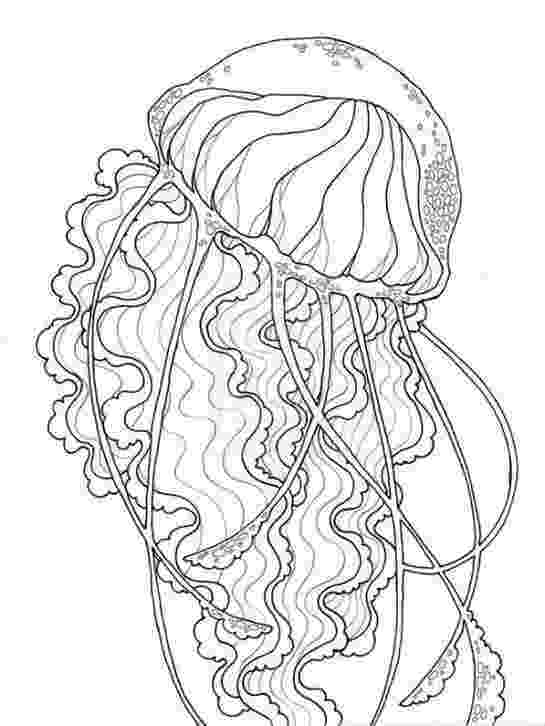 jellyfish for coloring giant jellyfish coloring page favecraftscom for coloring jellyfish