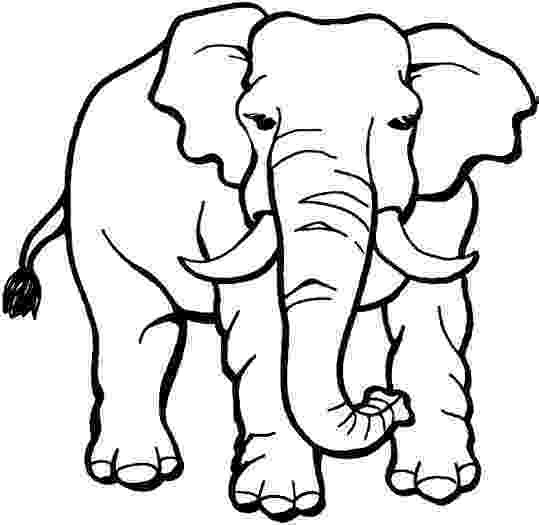 jungle animal coloring pages 9 jungle animals coloring pages gtgt disney coloring pages pages coloring animal jungle
