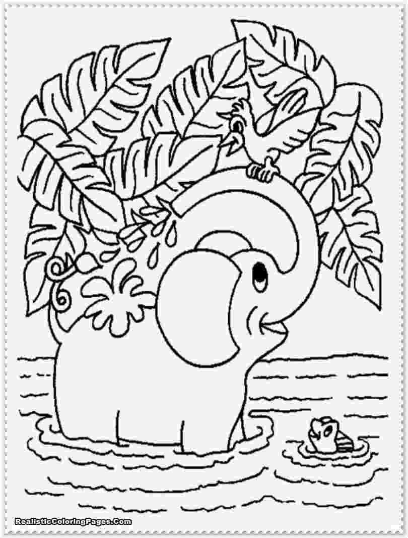 jungle animal coloring pages realistic jungle animal coloring pages realistic animal jungle coloring pages
