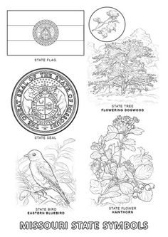 kansas state symbols coloring pages 1000 images about kansas day on pinterest kansas day kansas coloring state symbols pages