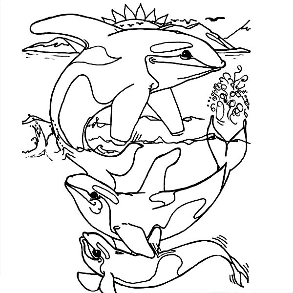 killer whale coloring page free printable whale coloring pages for kids page coloring killer whale