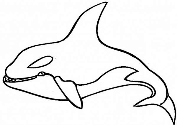 killer whale coloring page killer whale coloring pages to download and print for free killer whale coloring page